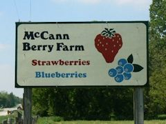 McCann Berry Farm Sign